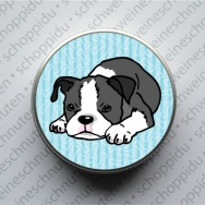 Minidose - Boston Terrier liegt